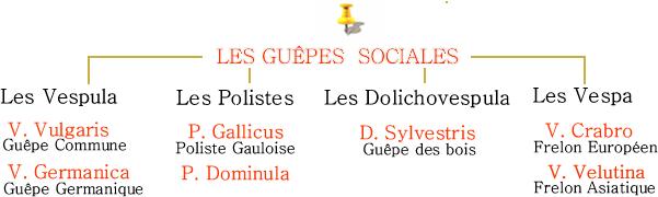 Guêpes Sociales
